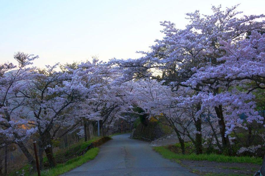 kyobashira014.jpg